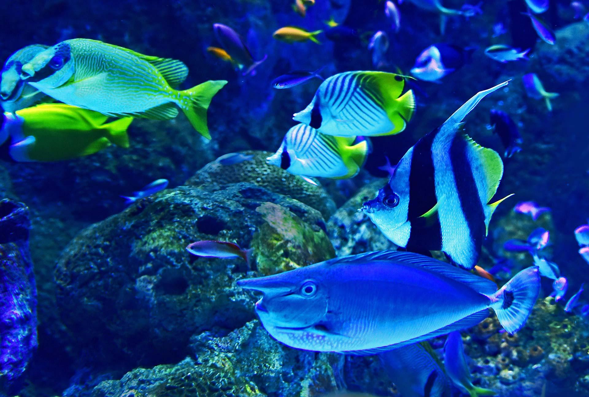 Poissons de mer dans un aquarium