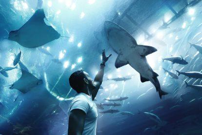 Requin dans un aquarium