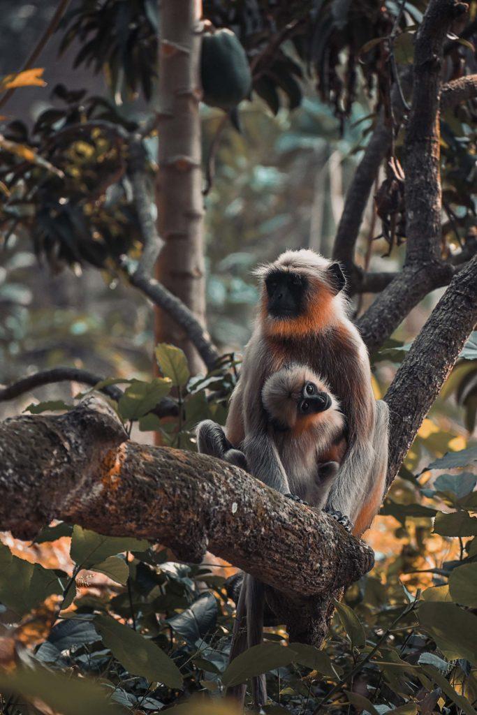 Deux singes blancs sur un arbre