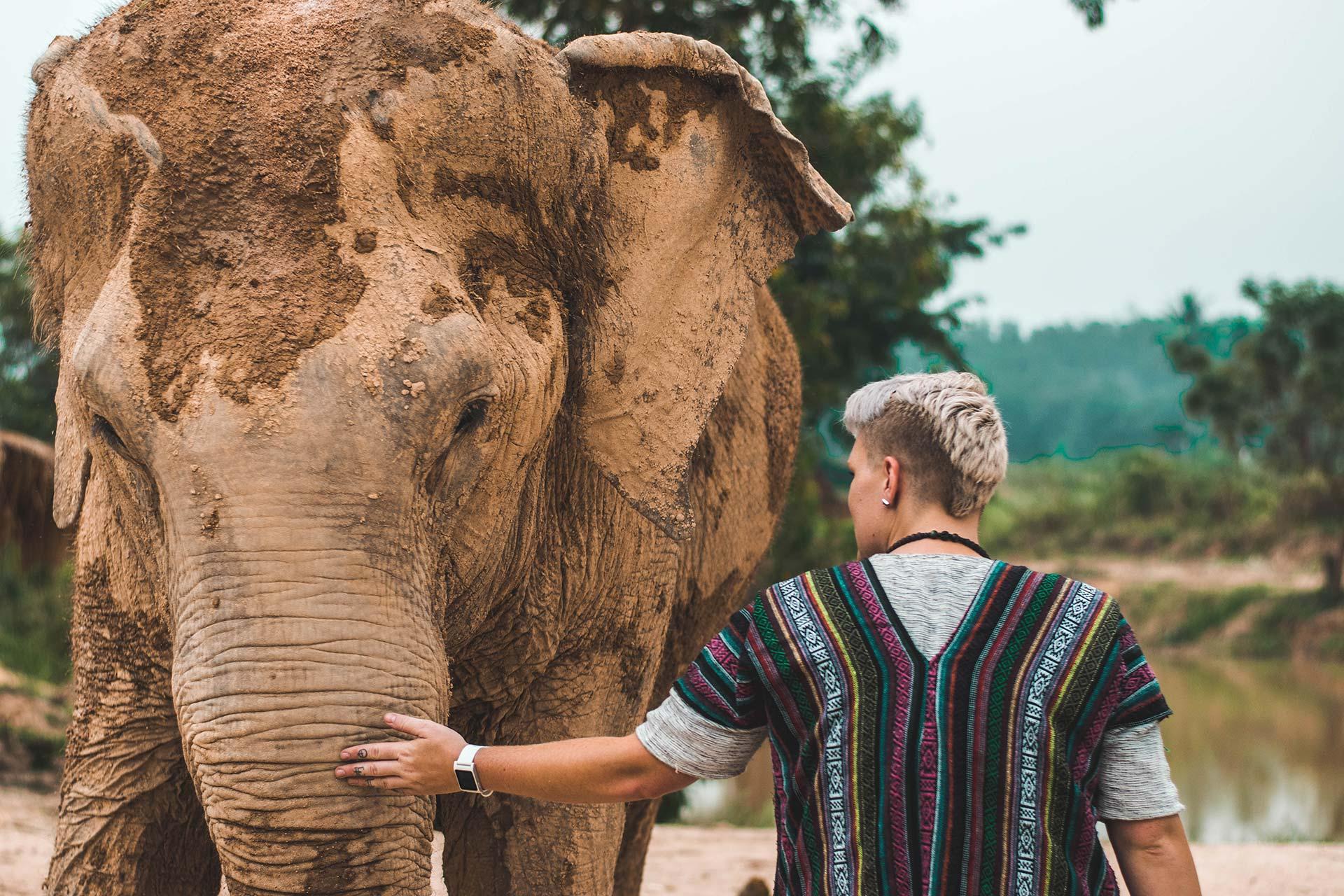 Soigneur animalier caressant un éléphant