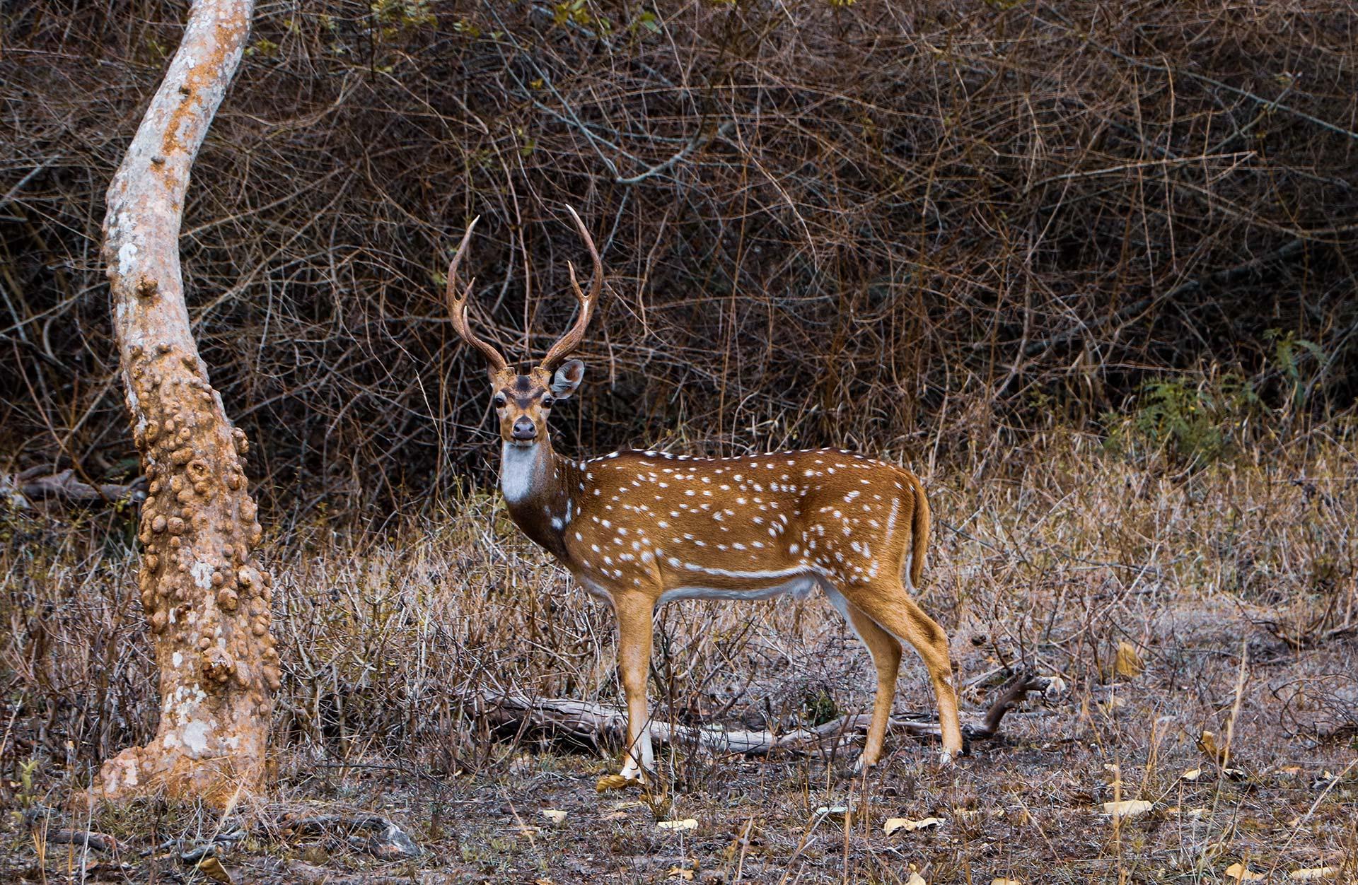 Antilope Parc de Clères