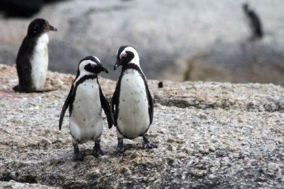 Famille de penguins