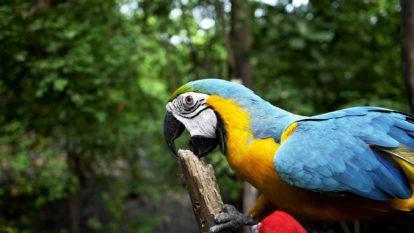 Perroquet de Parrot World